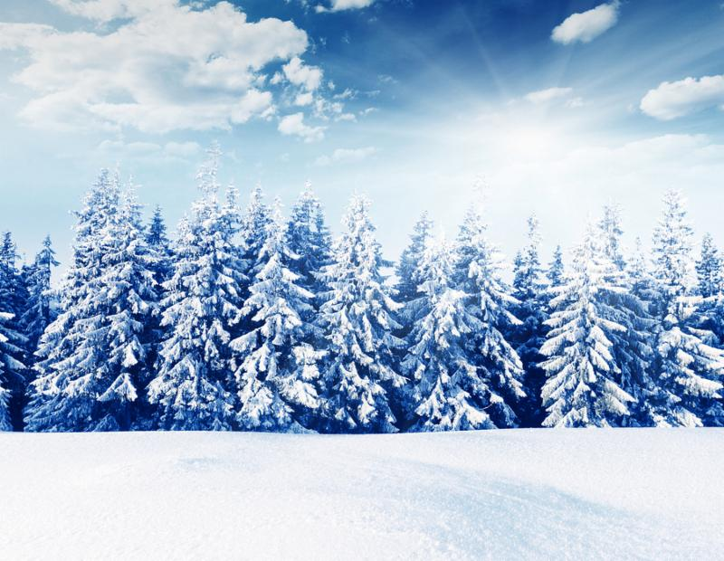 Snow covered trees in the mountains. Beautiful winter landscape. Winter forest. Creative toning effect