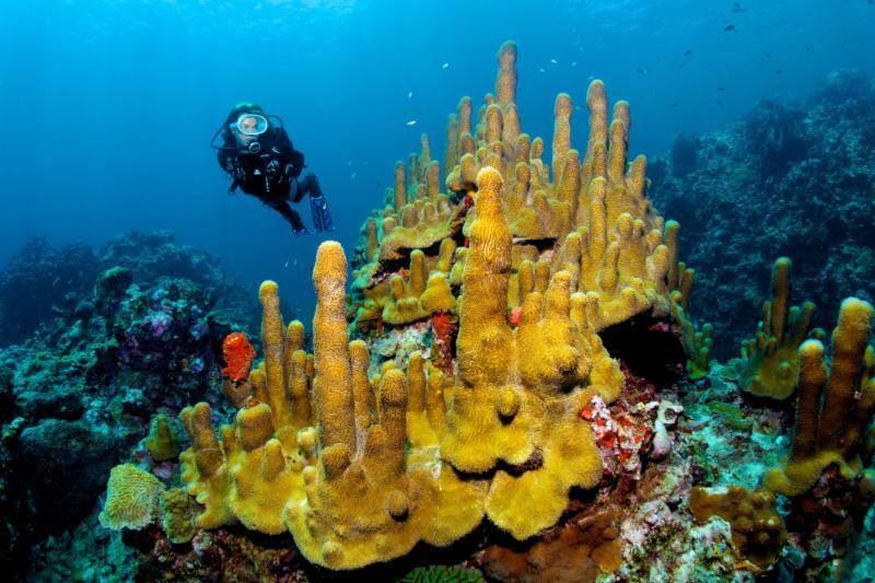 Os entusiastas do mergulho podem celebrar o Dia da Terra em Anse Chastanet com um mergulho de limpeza subaquático.