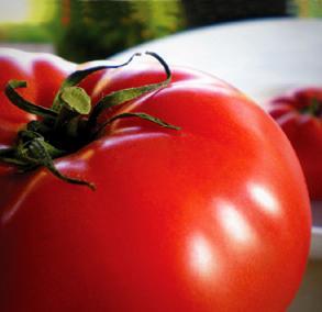 gallon tomato