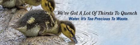 Aquarion ducks