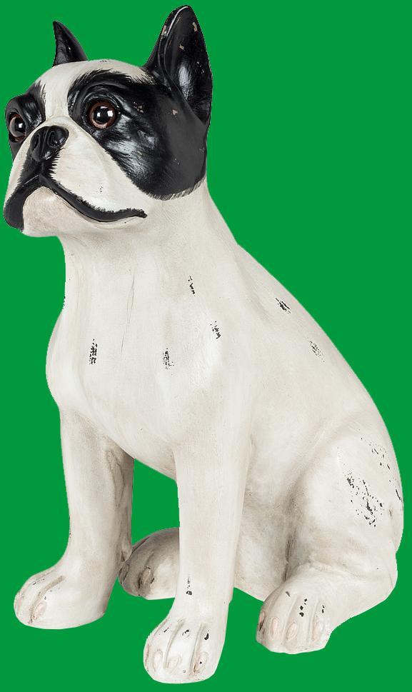 Rhett Boston Terrier