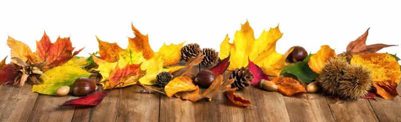 Colorful autumn leaves chestnuts and cones on natural wooden table studio isolated on white panorama format