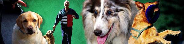 show-dogs-header.jpg