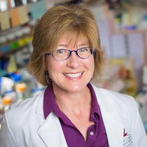 Suzanne Baker PhD