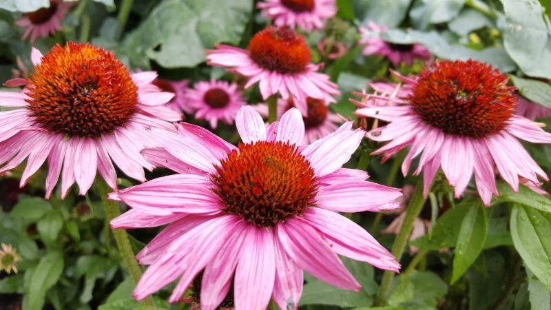 GrowHaus Perennial