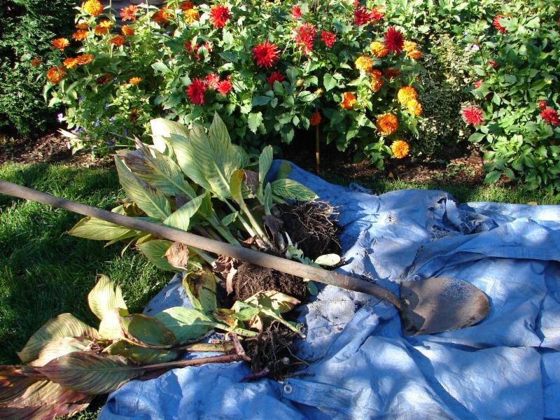 Fall Garden Prep