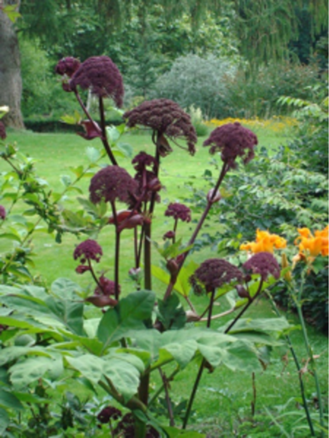perennials to leave up