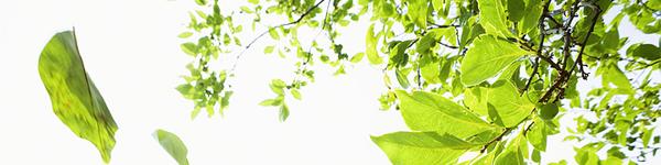 falling_leaves_hdr.jpg