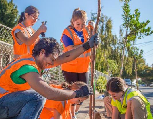 Uriel Hernandez plants trees in East Palo Alto