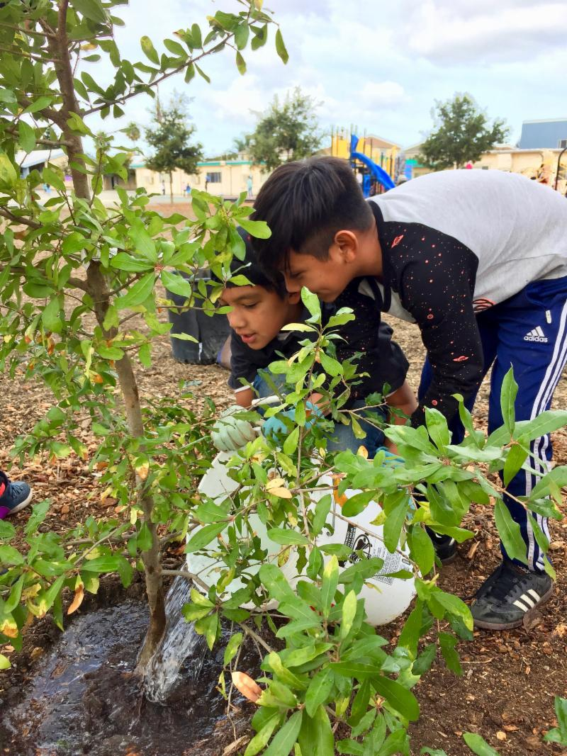 Kids watering a newly planted tree.