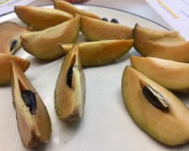 sapodilla slices