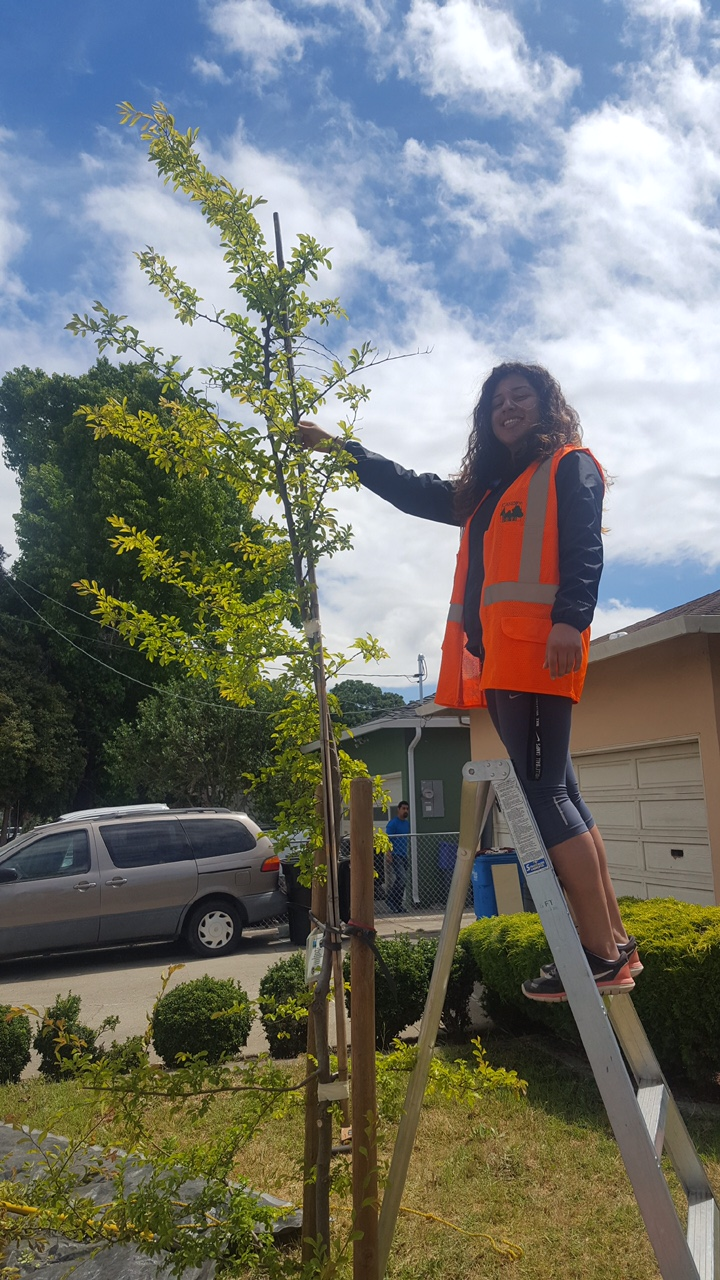 Urban Forester Intern