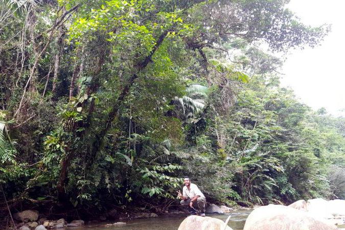 Uriel in the jungle