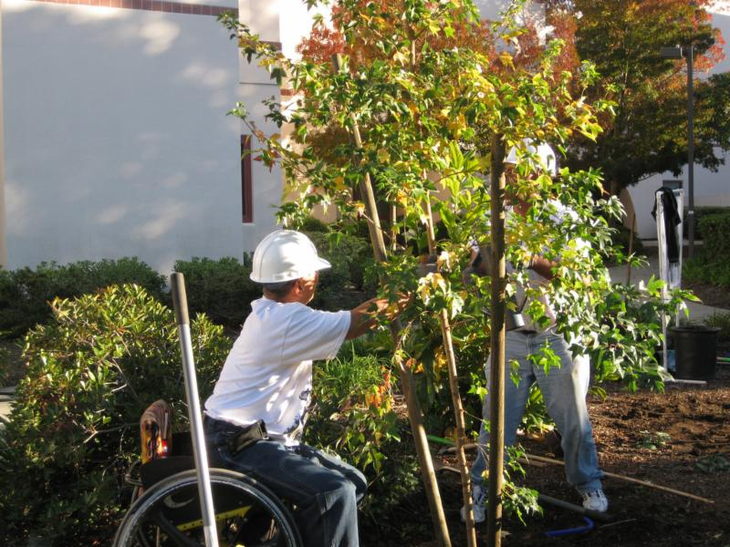 Veterans and Canopy vols plant a tree