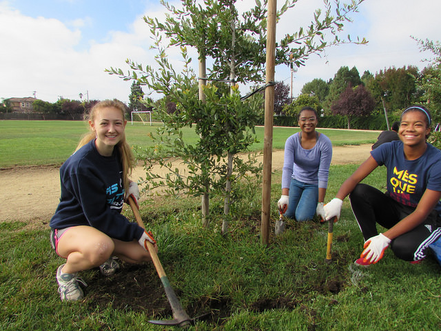 Care for community trees
