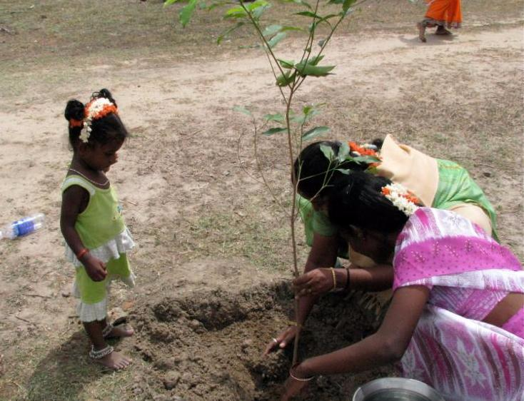 Volunteers help reforest india
