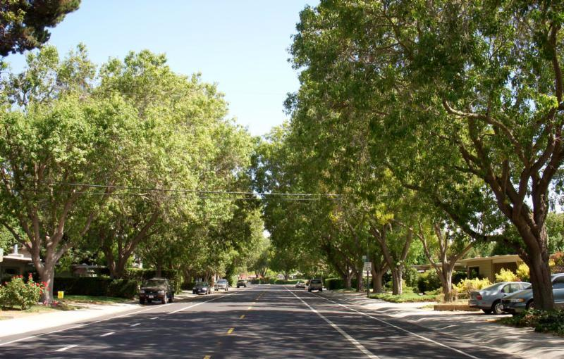 Urban trees provide a host of benefts