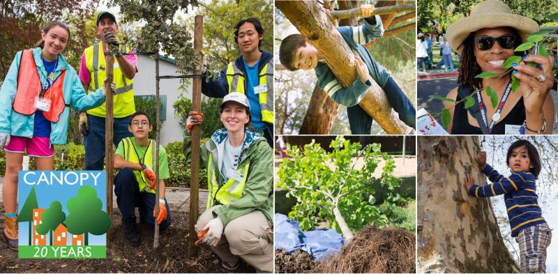 Healthy Trees, Healthy Communities