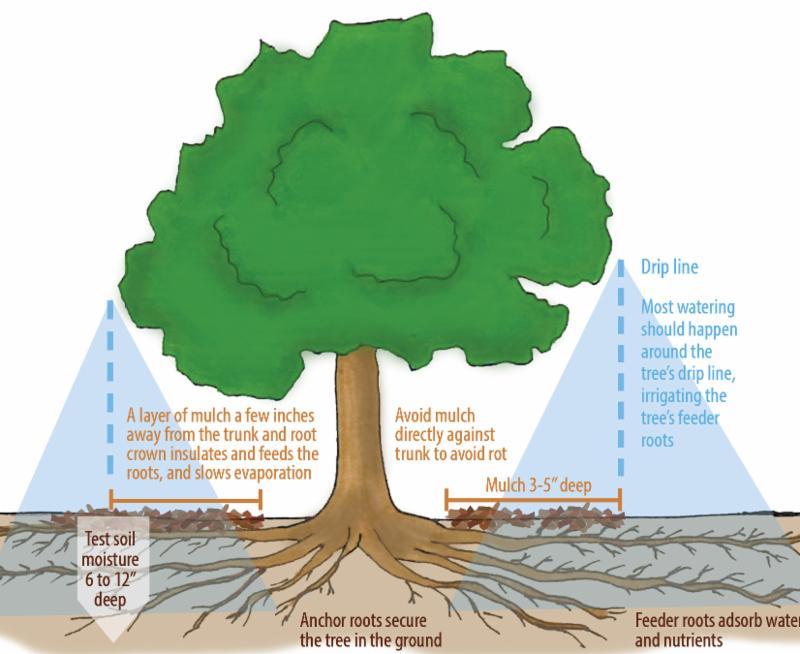 Tree Care diagram