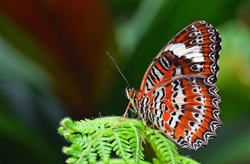 Butterfly by David Clode_ via Unsplash