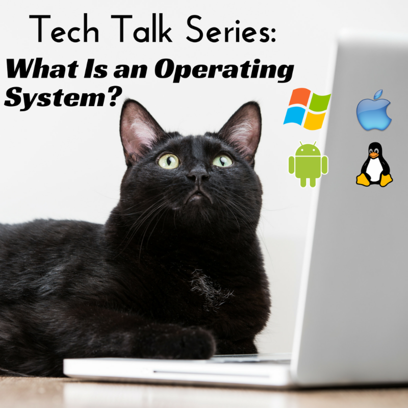 Tech Talk Series - Cat with laptop