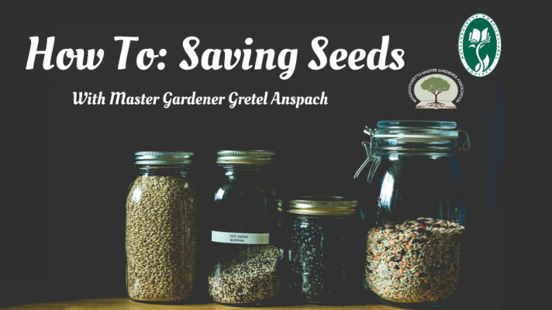 Saving Seeds with Gretel Anspach
