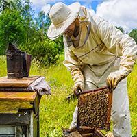 Ken Warchol_ beekeeper