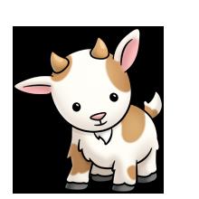 Petting zoo goat