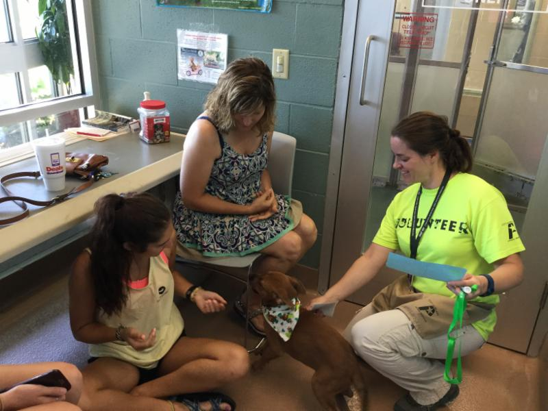 A volunteer introduces a puppy to a prospective family.