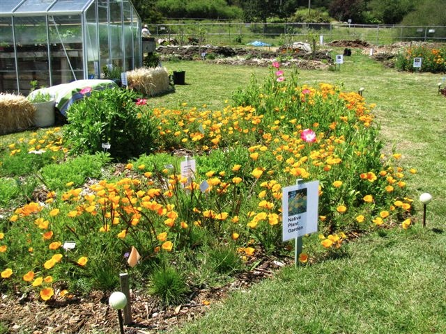 Pacifica gardens native plant sale rescheduled for for Native aquatic plants for sale