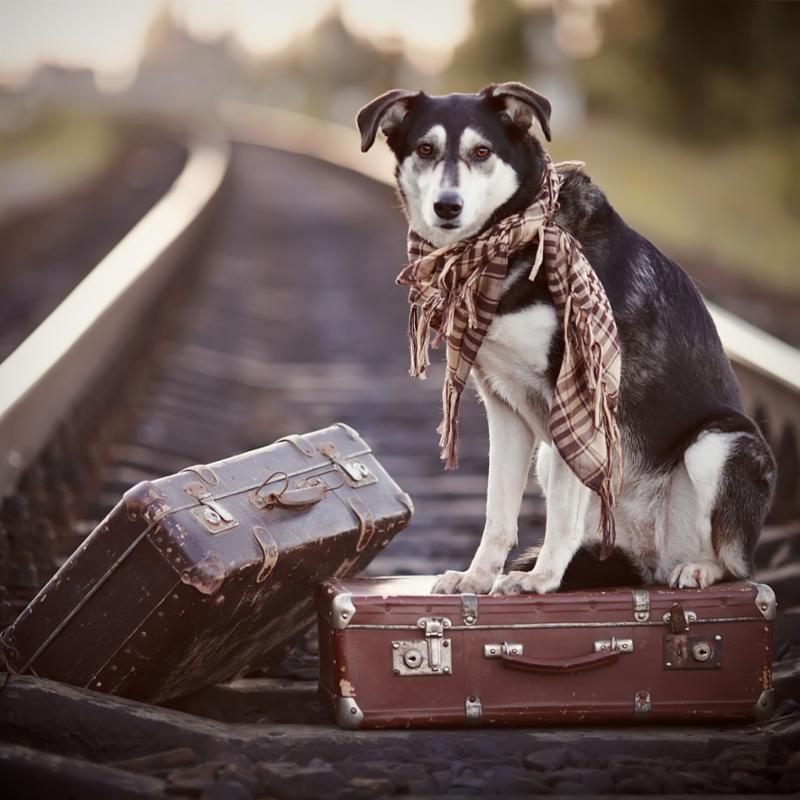 dog_on_suitcase_scarf.jpg