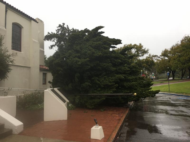 VMBP Tree Down