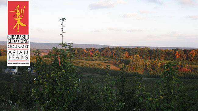 fall_vista_of_pears