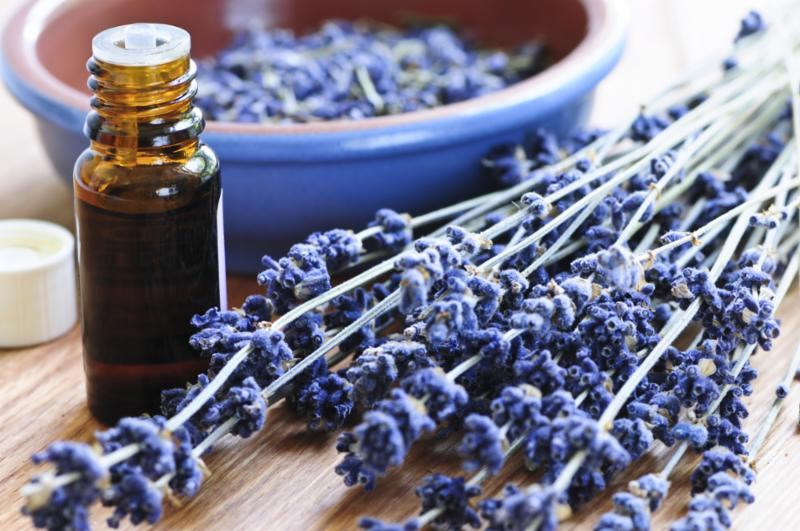 lavender_essential_oil.jpg
