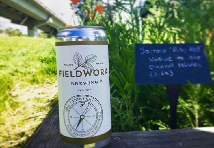 Fieldwork Wheat