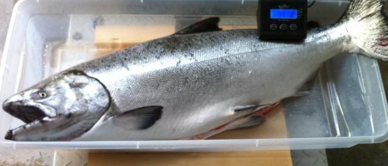 Eiko's salmon