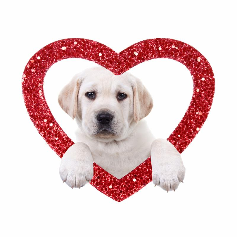 Valentine Labrador puppy dog and glitter heart isolated on white