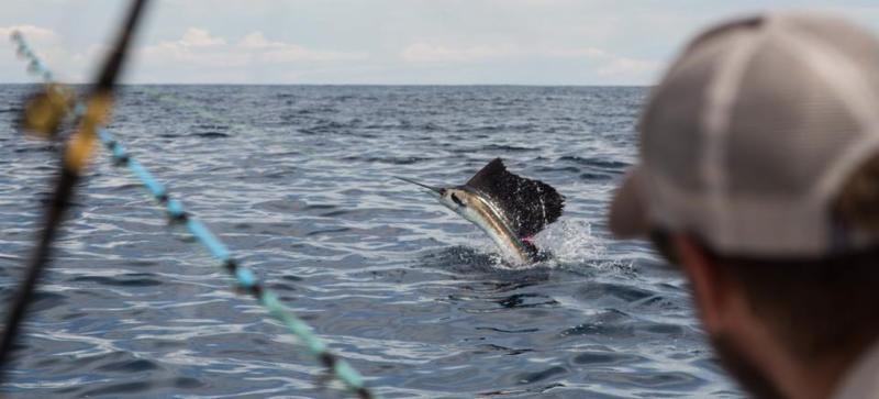 Costa Rica - Fish on Line