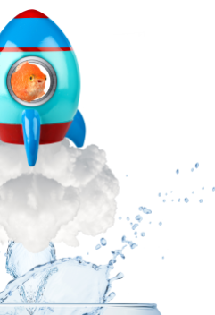 Goldfish Rocket Image