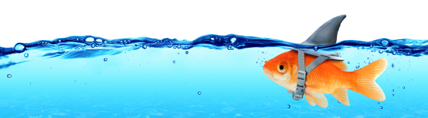 Goldfish-Shark Ocean Image
