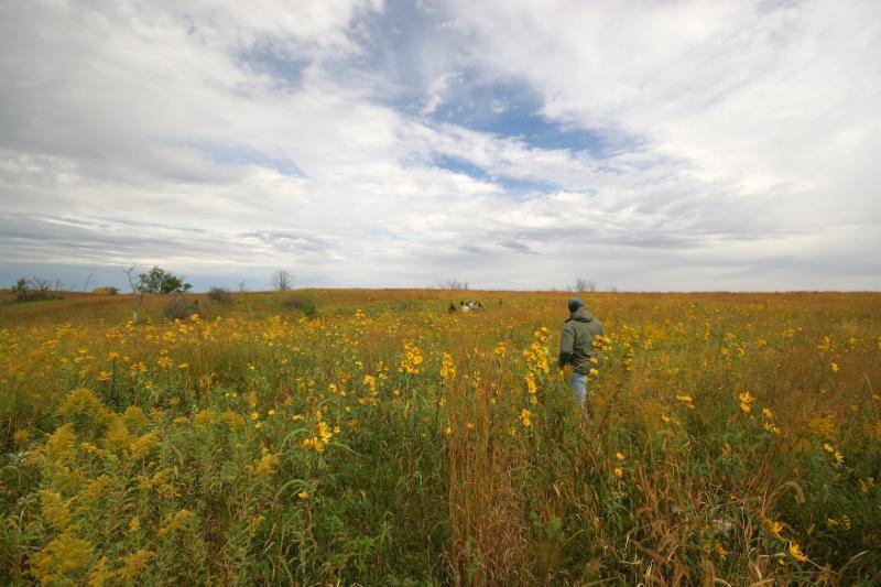 Kothenbeutal Prairie