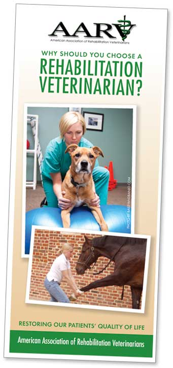 Why Should You Choose a Rehabilitation Veterinarian? brochure cover
