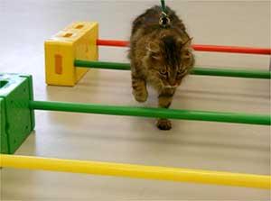 Cat walking through Caviletti poles