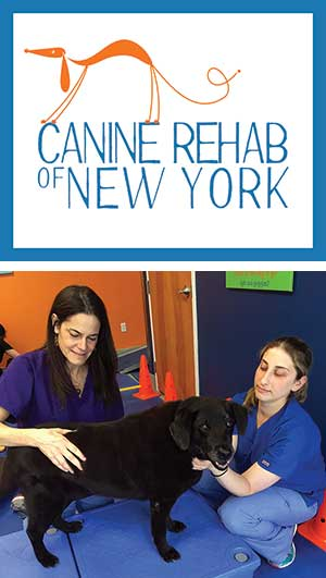 Canine Rehab of New York logo and photo