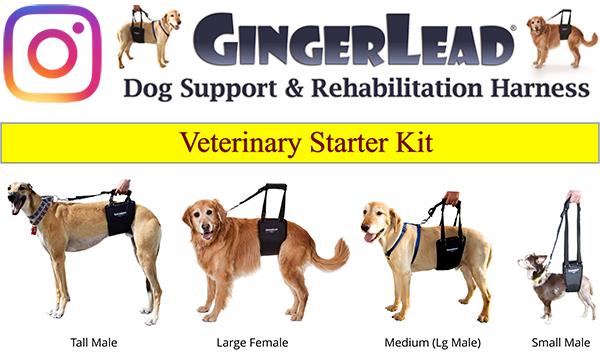 Instagram logo and GingerLead starter kit image