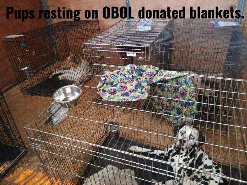 Example of the many dogs we comforted with soft blankets and pet beds