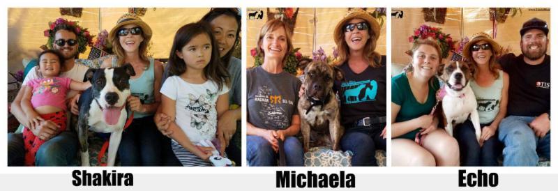 Recent Adoptions