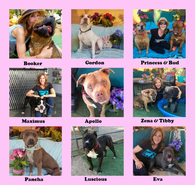 LBWF Adoptable Dogs
