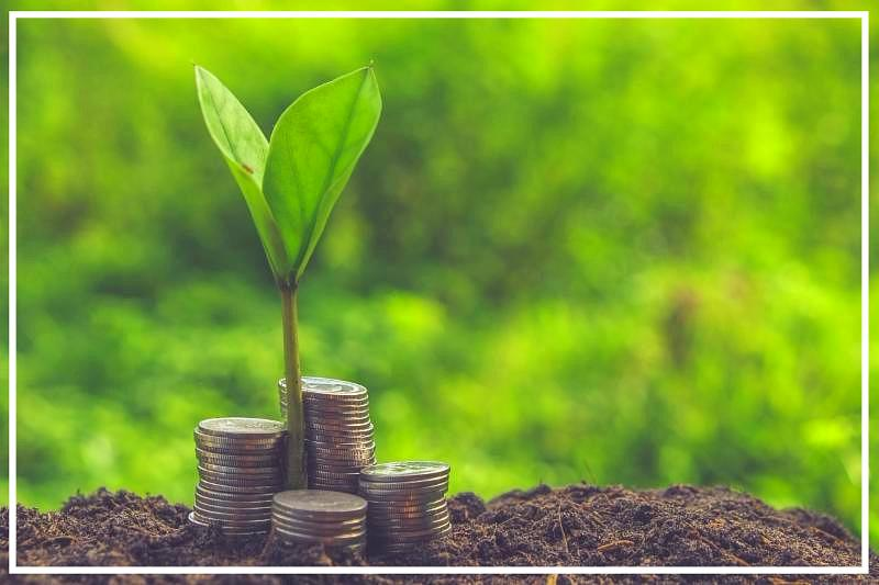 input loans_plant and coins