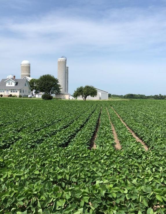 July 2018 soybean field